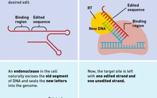 Search-and-replace genome editing