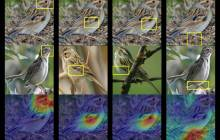 Deep learning shows its thinking by explaining the reasoning behind its predictions