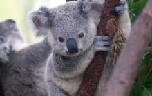 Protection of Australia's threatened species could be improved by a factor of seven