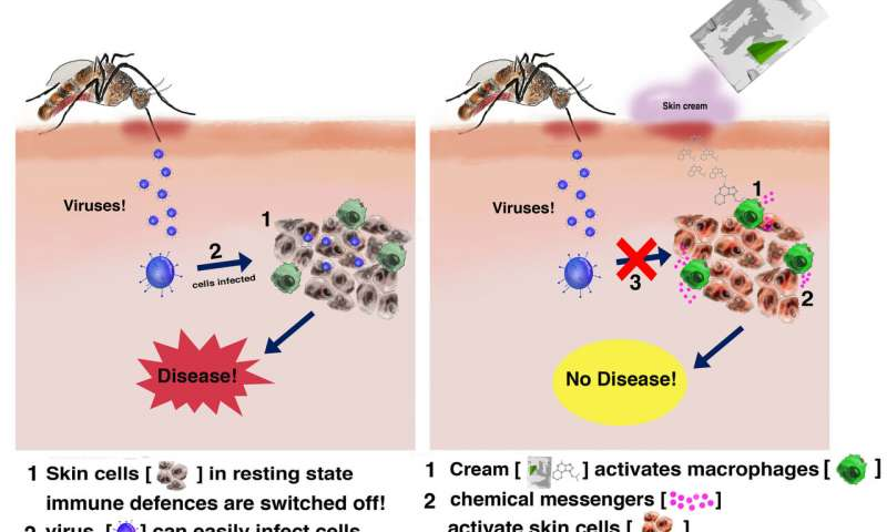 Skin cream activates the body's immune defense to stop viruses in their tracks. Credit: Steven Bryden