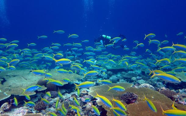 We know, yet another warning: Our most biodiverse ecosystems face a perfect storm