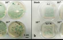 A new inexpensive paper-based infection test allows fast diagnosis at the point of care