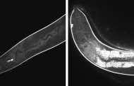 Using molecular nanodrills to treat skin diseases