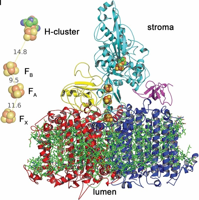 A model of Photosystem 1 core subunits