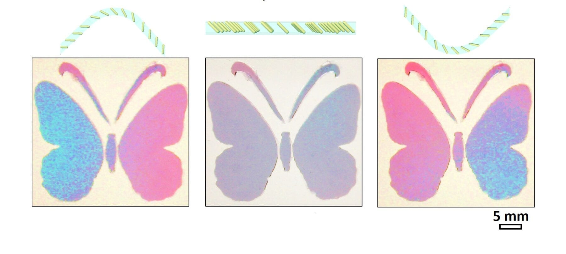 New material with programmable colorimetric responses can behave more like animal skins.