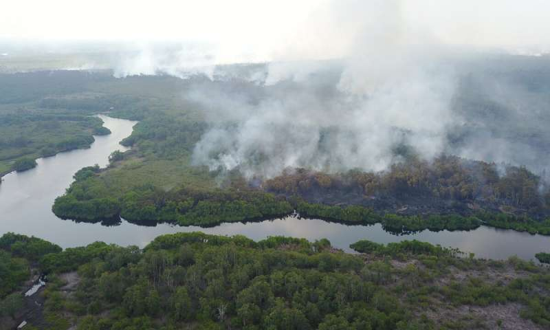Tropical peatland conservation could protect humans from new diseases