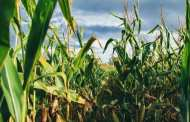 Adding a simple polymer to fertilizers or pesticides could dramatically reduce agricultural pollution
