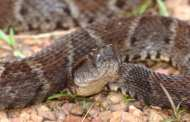 A'super glue' derived from snake venom stops bleeding in seconds