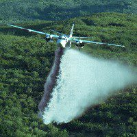 Airplane spraying a forest. Photo by Thomas Hays (colors have been changed).
