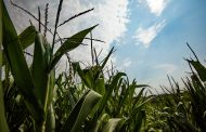 Opportunity to improve crop productivity by 10 to 20 percent with new dynamic photosynthesis model