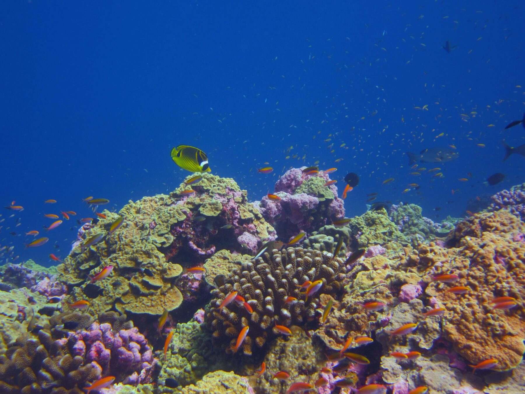 A healthy coral reef in the Phoenix Islands Protected Area.