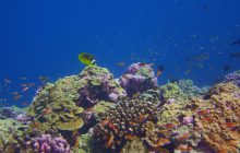 Is it possible that some coral reefs could keep pace with ocean warming?