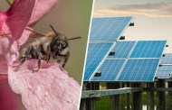 Could putting honeybee hives on solar parks add millions of pounds to UK agriculture while really helping bee populations?