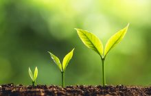 Switching on plants' response to light to encourage more food growth