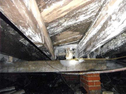 effects of mold in the crawl space