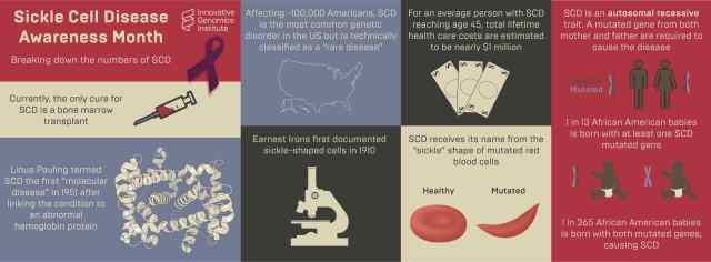 Infographic about sickle cell disease, describing basic facts and statistics