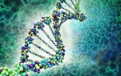 800,000 human gene evidence