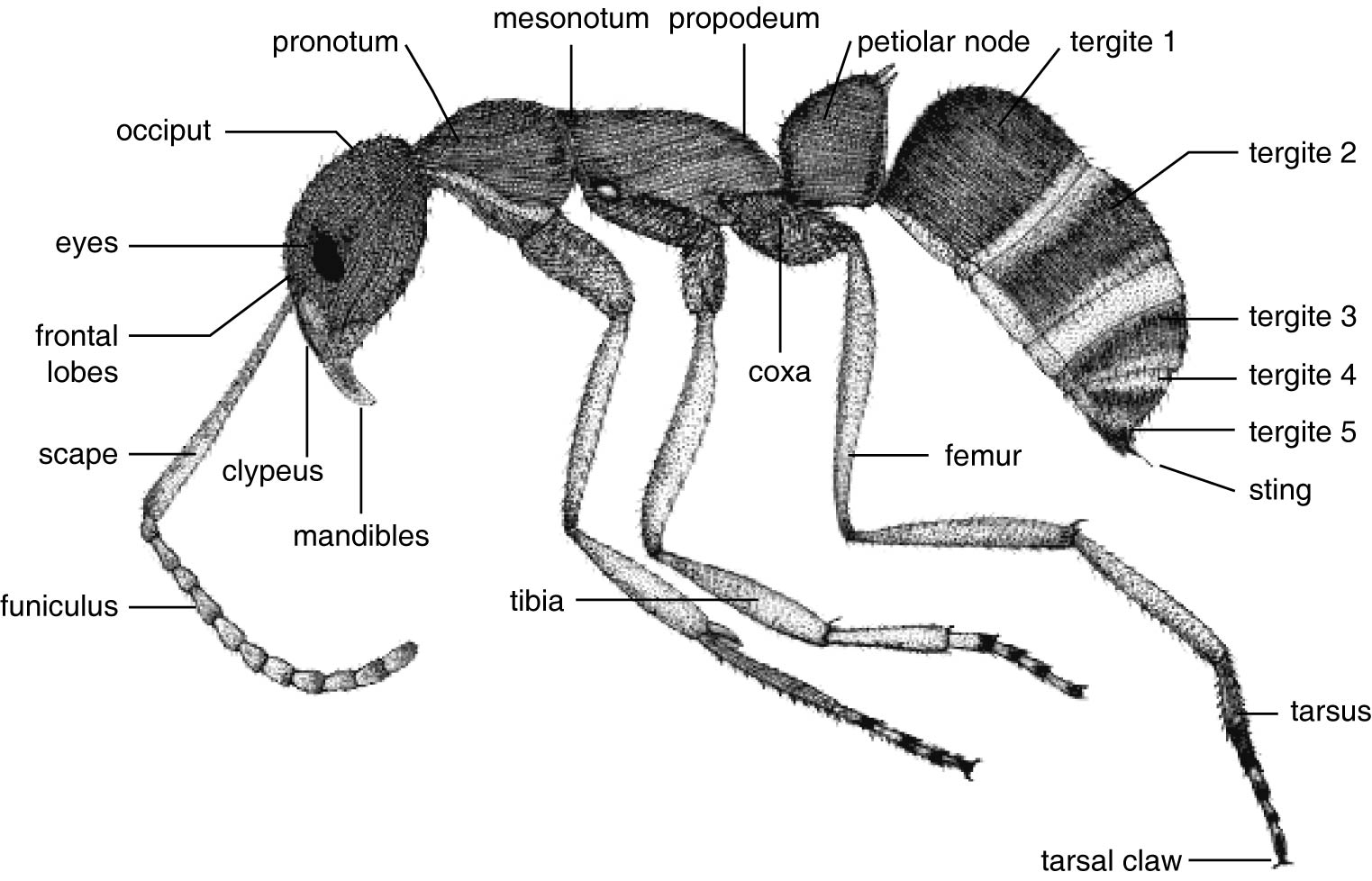 Morphological And Molecular Characterization Of The Main
