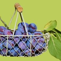 plums-in-the-basket-2644651_1280