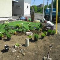 宿根草植え付け