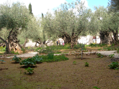 The pilgrims stopped and prayed at the Garden Gethsemane, which was where Jesus prayed the night before his crucifixion.