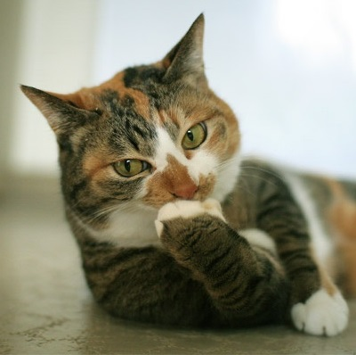 企画で悩むネコ