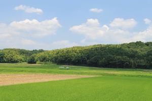 拡がる草原