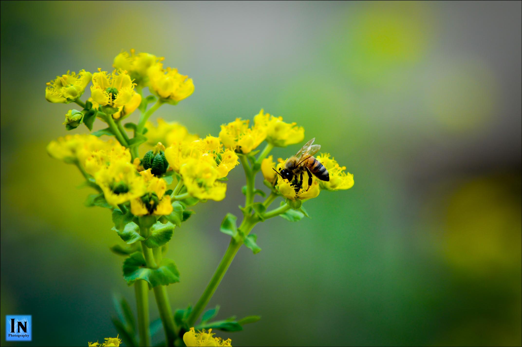 Life Honey