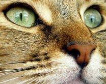 photoblog-20040613
