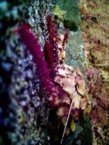 photoblog-20041112