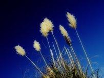 photoblog-20041122