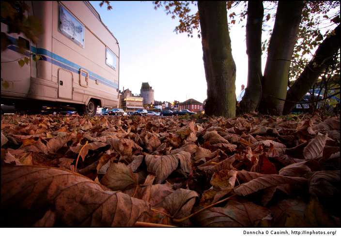 Windsor Leaves