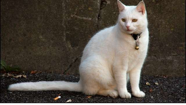 Patrick's Hill Cat
