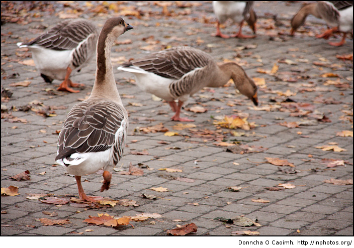 "Watch out! Duck! I said, ""duck"""