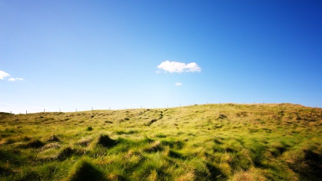 Sunlit Grassy Slopes