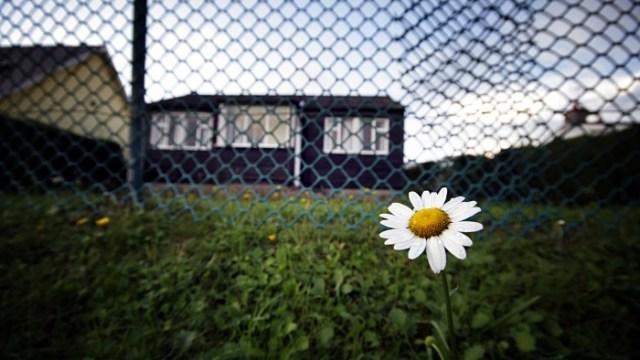 The lone daisy