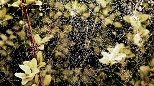 Wet Wellow Web