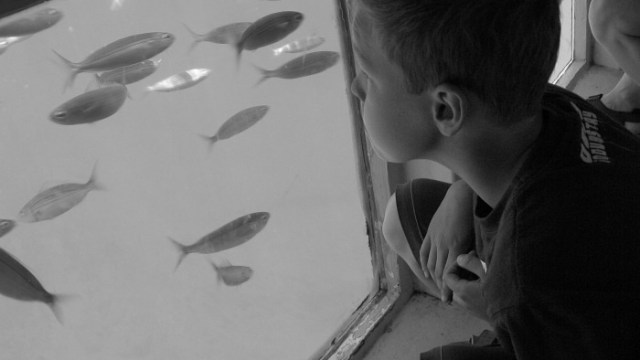Watching the fish underwater in Lanzarote