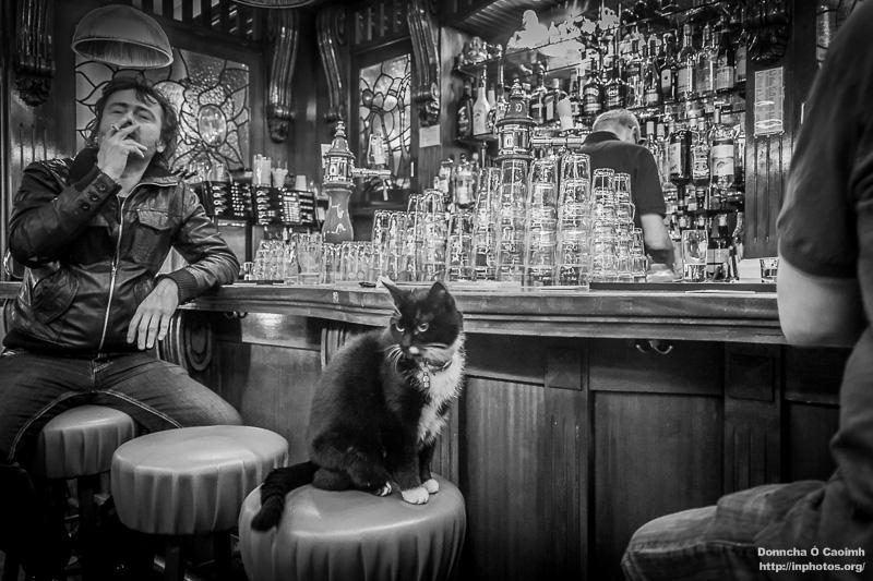 Dutch Cat in a Pub