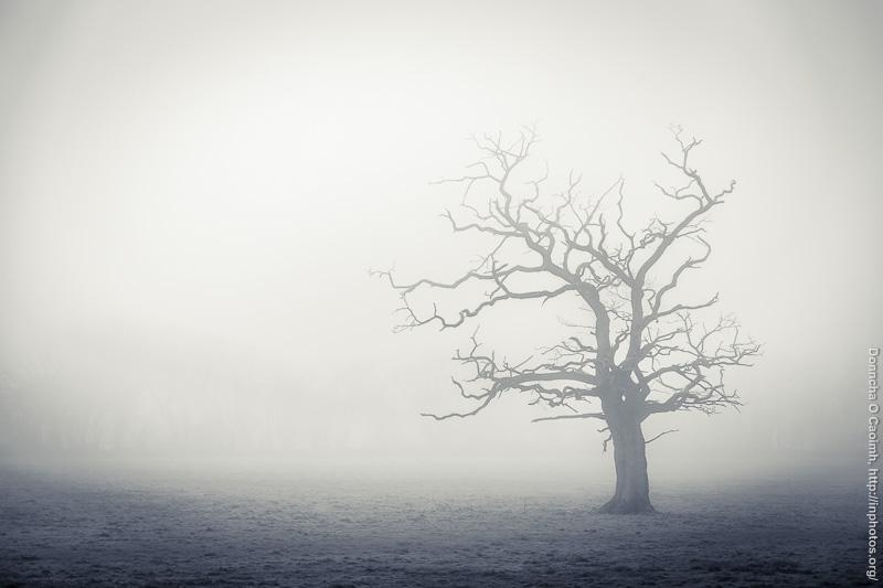 Blarney Tree in Fog