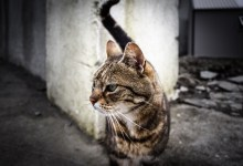 Cat in Baltimore