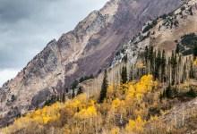 Aspen on the Mountains