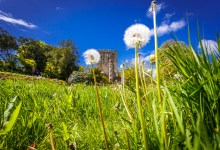 Blarney Castle in the Sun