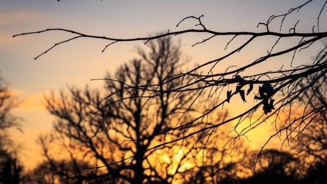 The Last Leaves
