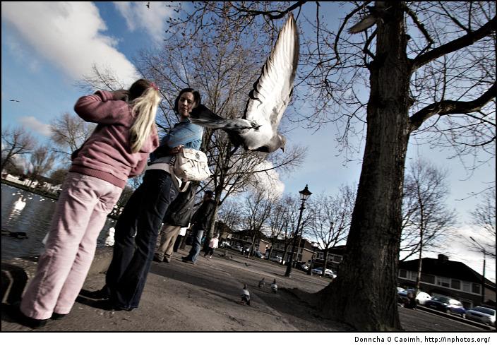 The pigeon flies away!