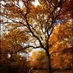 The beauty of Burnham Beeches