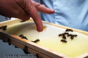 Tasting honey in comb, Graanmarkt 13, Antwerp, Belgium