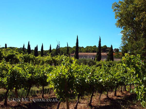 Vineyard, Abbaye de Valmagne, Villeveyrac