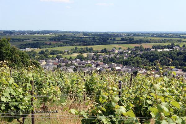 Vineyards, Domaine des Forges, Saint Aubin de Luigné