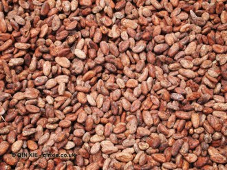 Cocoa beans ready to ship, Loma Sotavento Cacao plantation, Dominican Republic